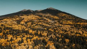 Fall Leaf Covered Mountains in Flagstaff, AZ