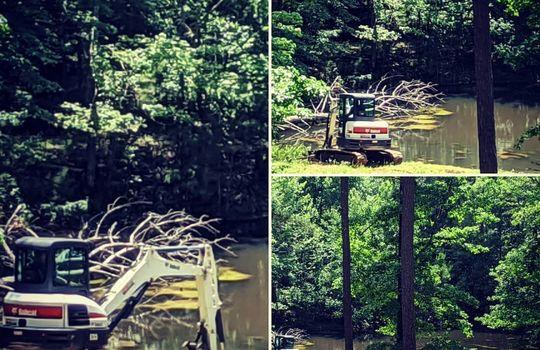 lake tree removal