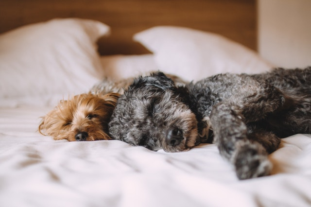 Chicago Homeowners With Pets: Some Selling Do's and Dont's