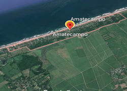 Amatecampo