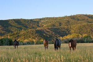 Boyer-Home Horses 2 WEB