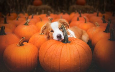 Get Ready for Halloween! Enjoy Boone's Pumpkin Patches and Corn Mazes