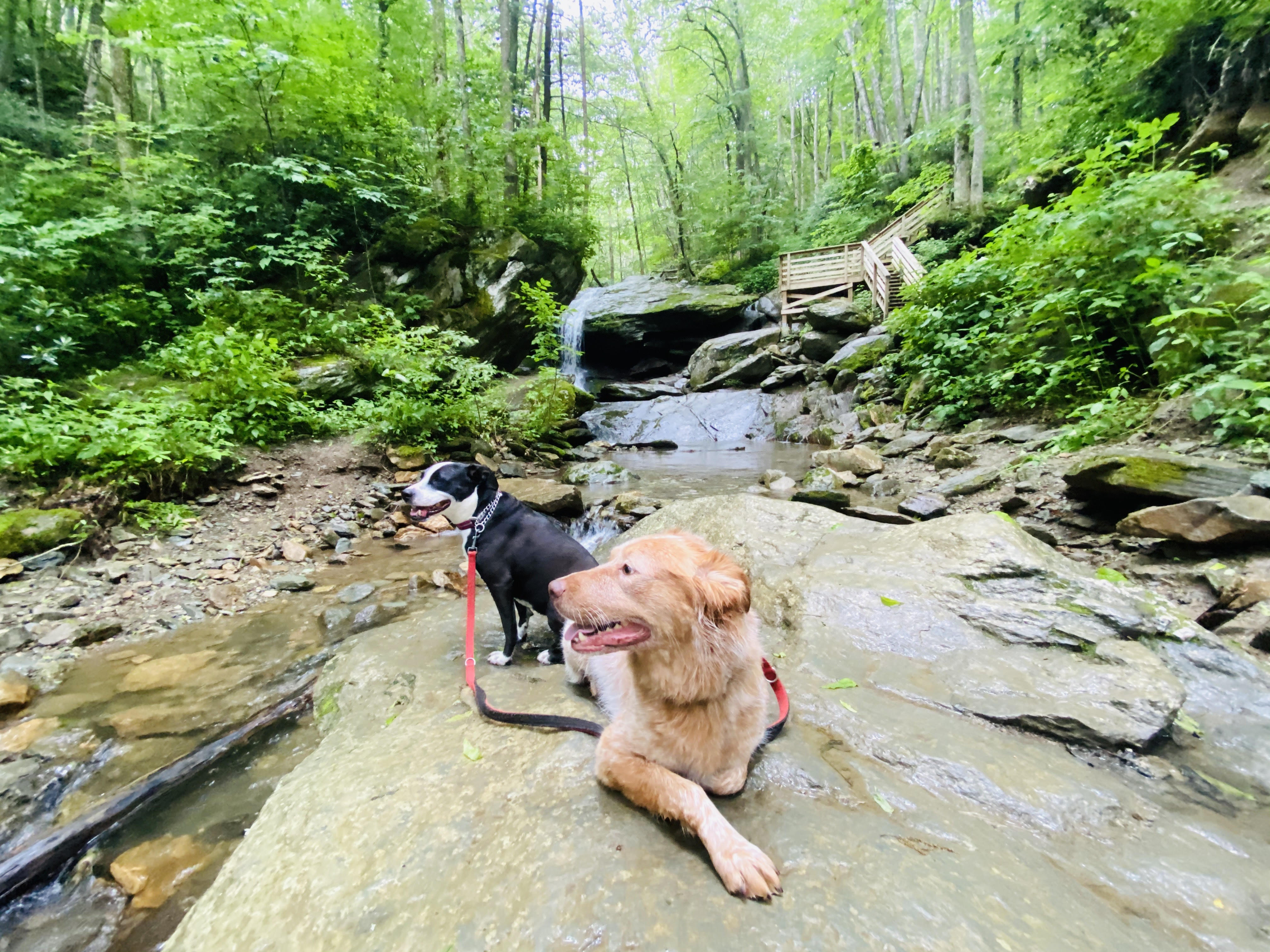 Dogs sitting on a rock at a waterfall on Otter Trail in Seven Devils, NC.