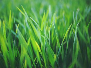 Home owner's associations require certain requirements for your lawn, grass, and landscape.