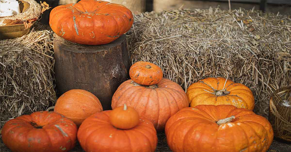 Pumpkins at a fall festival in the High Country of North Carolina