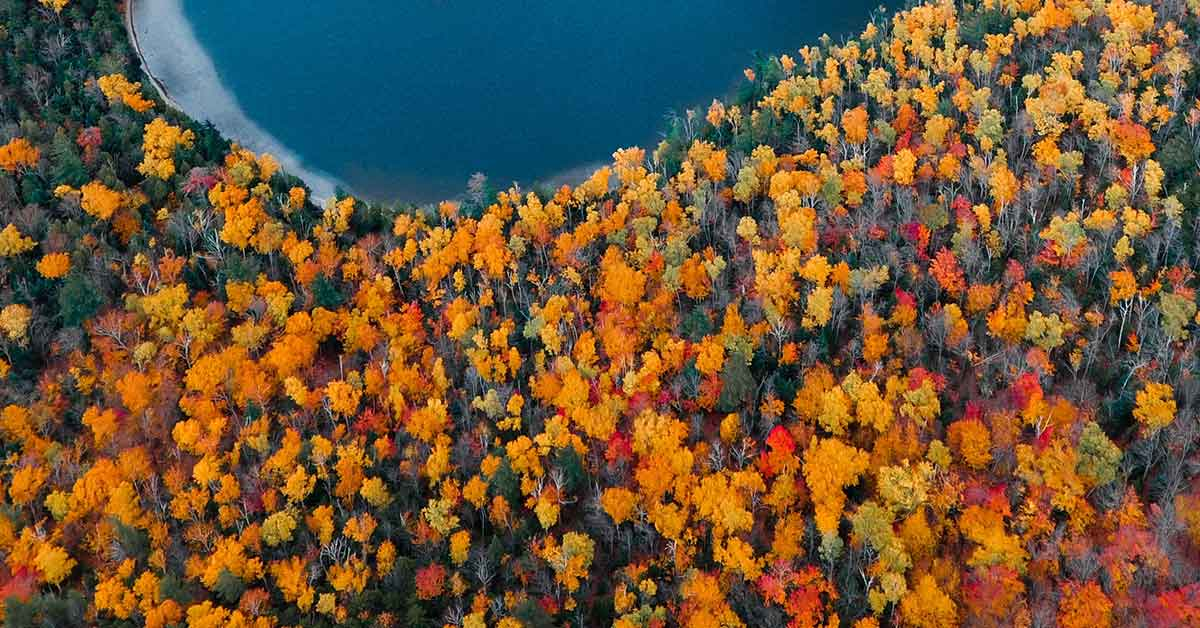 Fall leaves in the Blue Ridge Mountains of North Carolina