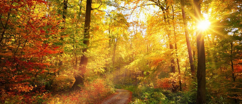 Northern Virginia in the Fall
