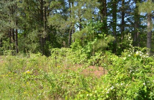 Davis White Lane, Chesterfield, Chesterfield County, SC, 29709, Home and land for sale 10