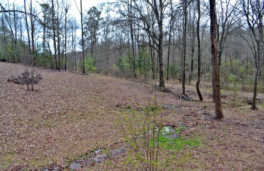 2246 Hwy 145 North Chesterfield SC 29709 Country Home For Sale (21)