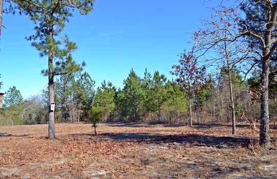 4907 Gurney Road Wallace SC Marlboro County 29596 Country Home with Acreage (12)