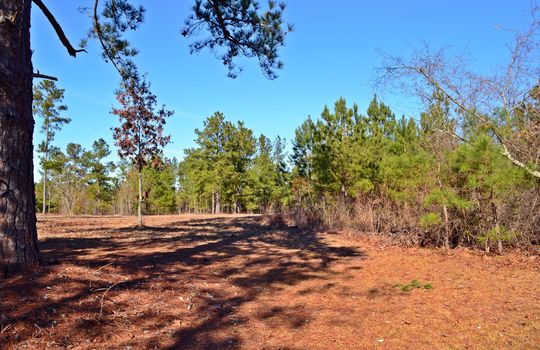 4907 Gurney Road Wallace SC Marlboro County 29596 Country Home with Acreage (17)
