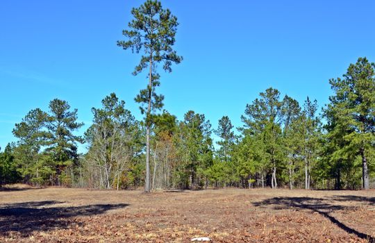 4907 Gurney Road Wallace SC Marlboro County 29596 Country Home with Acreage (19)