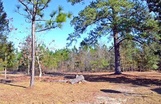 4907 Gurney Road Wallace SC Marlboro County 29596 Country Home with Acreage (21)