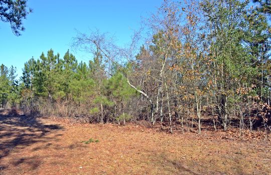4907 Gurney Road Wallace SC Marlboro County 29596 Country Home with Acreage (22)