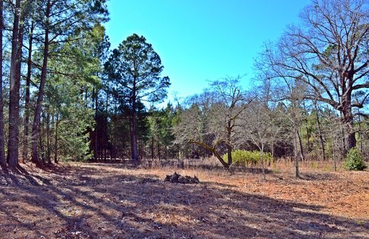 1858 Brown Springs Church Road Hartsville Chesterfield County SC 29550 Country Home with Acreage For Sale (20)