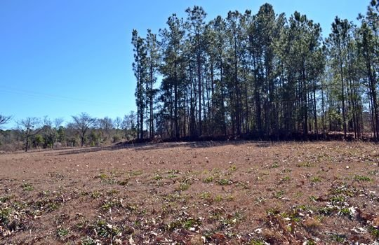 1858 Brown Springs Church Road Hartsville Chesterfield County SC 29550 Country Home with Acreage For Sale (21)