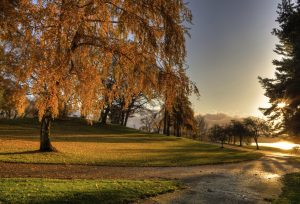 greenlake fall photo - stock photo