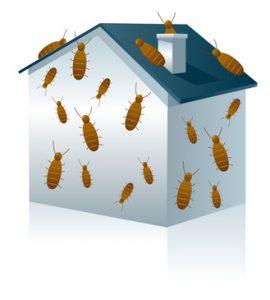 Diagnostic maison : termites