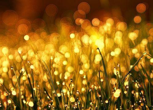 Sunlight hitting dew on blades of grass in Prosper, TX