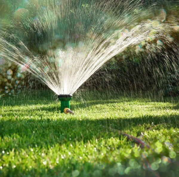 Are You Making These 5 Lawn Watering Mistakes?