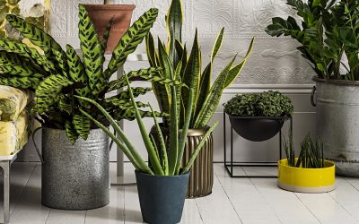 Houseplants: What to Consider