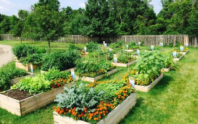 Think Spring! How to Map Out Your Garden Goals