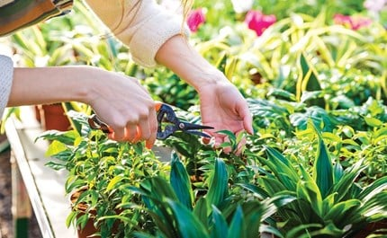 To Prune or Not to Prune? Plant Maintenance Tips