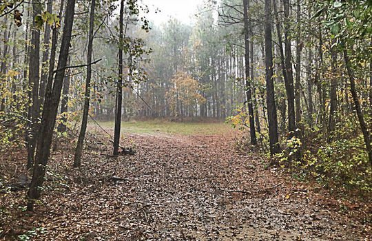 Goodwins Pond Road Bennettsville Marlboro County 29512 South Carolina Hunting Land Timberland For Sale 2a – Copy