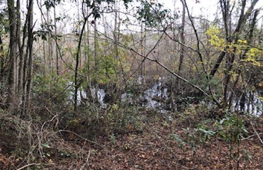 Goodwins Pond Road, Bennettsville, Marlboro County, 29512, South Carolina Hunting Land Timberland For Sale 3 – Copy