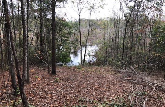 Goodwins Pond Road, Bennettsville, Marlboro County, 29512, South Carolina Hunting Land Timberland For Sale 4