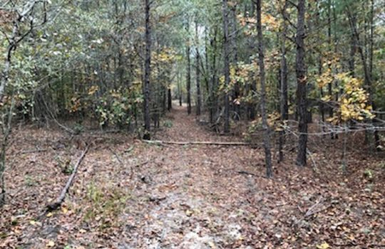 Goodwins Pond Road, Bennettsville, Marlboro County, 29512, South Carolina Hunting Land Timberland For Sale 5