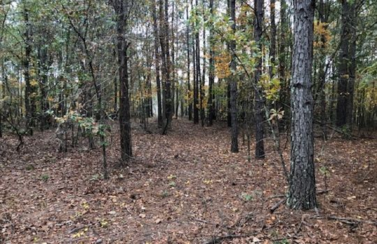 Goodwins Pond Road, Bennettsville, Marlboro County, 29512, South Carolina Hunting Land Timberland For Sale 7