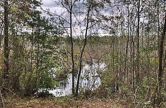 Goodwins Pond Road Bennettsville Marlboro County 29512 South Carolina Hunting Land Timberland For Salea – Copy