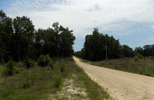 Rock House Road Mt Croghan Chesterfield County South Carolina Hunting Planted Pines Land For Sale (6)
