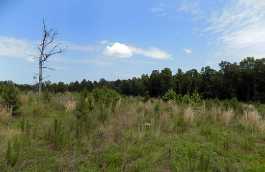 Rock House Road Mt Croghan Chesterfield County South Carolina Hunting Planted Pines Land For Sale (7) – Copy