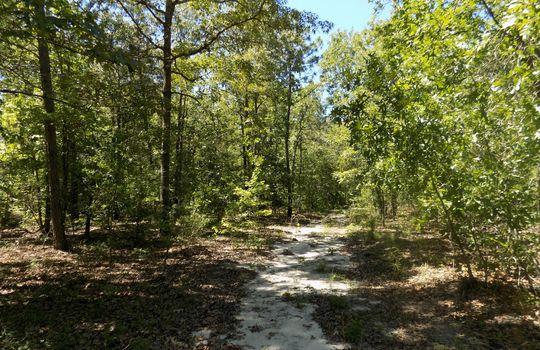Sam Jones Road Patrick Chesterfield County South Carolina Hunting Land For Sale (10)