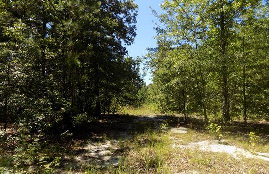 Sam Jones Road Patrick Chesterfield County South Carolina Hunting Land For Sale (12)