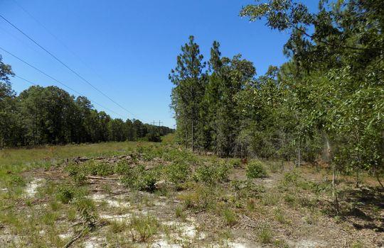 Sam Jones Road Patrick Chesterfield County South Carolina Hunting Land For Sale (16)