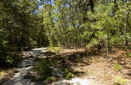 Sam Jones Road Patrick Chesterfield County South Carolina Hunting Land For Sale (18)