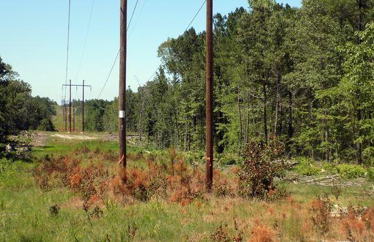 Sam Jones Road Patrick Chesterfield County South Carolina Hunting Land For Sale (2)