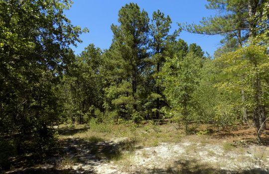 Sam Jones Road Patrick Chesterfield County South Carolina Hunting Land For Sale (9)