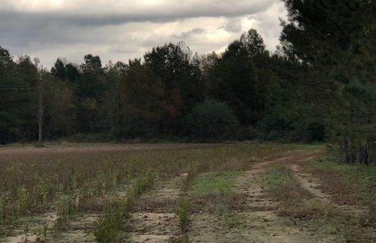 Scenic View Road, Bennettsville, Marlboro County, 29512, South Carolina Farm Hunting Land Timberland For Sale 1