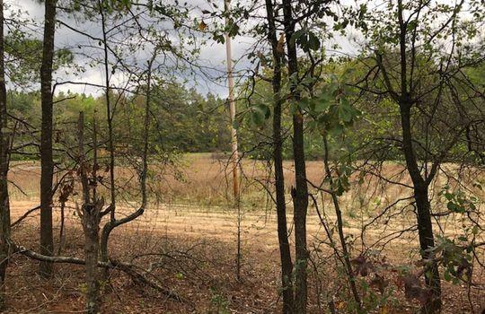 Scenic View Road, Bennettsville, Marlboro County, 29512, South Carolina Farm Hunting Land Timberland For Sale 3