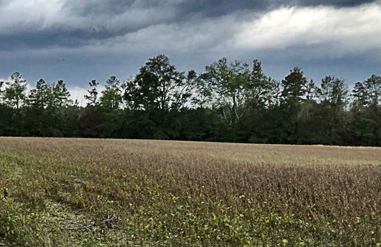 Scenic View Road Bennettsville Marlboro County 29512 South Carolina Farm Hunting Land Timberland For Sale 4a