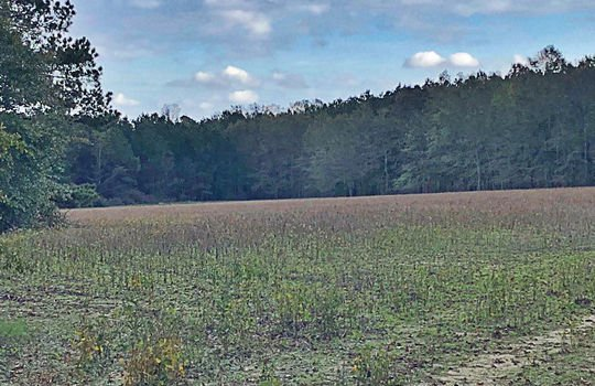 Scenic View Road Bennettsville Marlboro County 29512 South Carolina Farm Hunting Land Timberland For Sale 6a