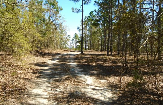 Teem Freeman Lane, Ruby, Chesterfield County, 29741, SC, Land for Sale 2
