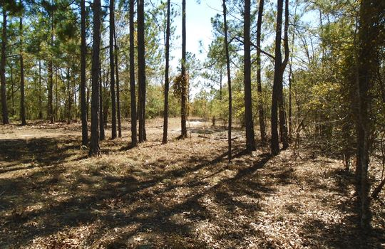 Teem Freeman Lane, Ruby, Chesterfield County, 29741, SC, Land for Sale 3