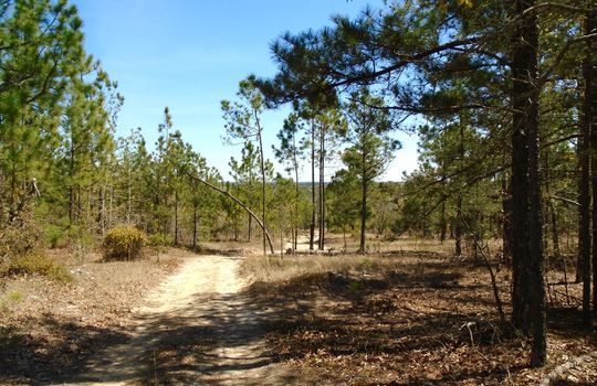 Teem Freeman Lane, Ruby, Chesterfield County, 29741, SC, Land for Sale 4