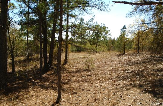 Teem Freeman Lane, Ruby, Chesterfield County, 29741, SC, Land for Sale 6