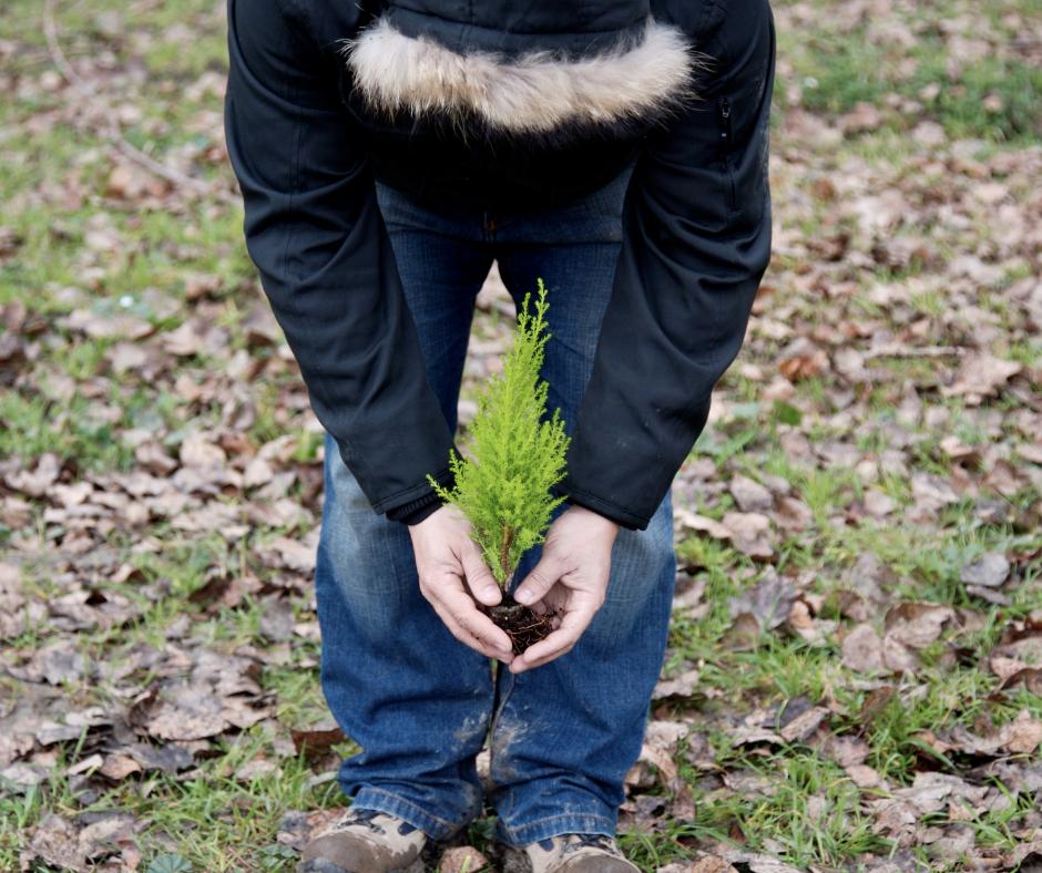 Afforestation vs Reforestation